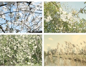 Photography Collection Flower Photography Set Nature Photography Wall Decor Summer Collection Get One Free 5x7 Photo Print Sale UK Art Sale