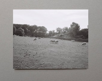Nature Photography Landscape, Scottish Sheep In Field, Gray Art, Black and White Nature Print, Black and White Photography, Grandparent Art
