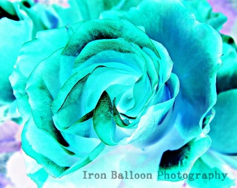 BLUE ROSE FLOWER Art Print