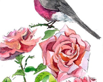 ACEO Limited Edition 2/25- Song of rose robin