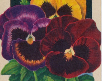 PANSY Vintage Flower Seed Packet  Lithograph by Tuckers' Seed House in Carthage MO