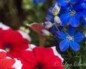 Red flower ,purple flower, fine art, Landscape photography, Texas, Western, flowers, flowers, rustic art, wall art