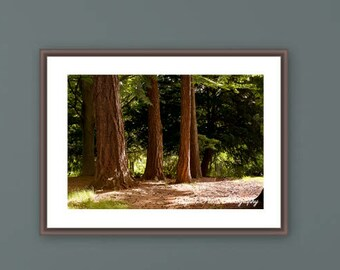 Nature photography, Woods, Morning, Sunshine, Summer, Light, botanical, large wall art, 16x24, landscape, trees, Christmas, gift guide