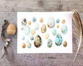 Birds eggs print - Watercolor illustration - Natural blue, beige, brown - 6x8 and 8x12 Fine art prints