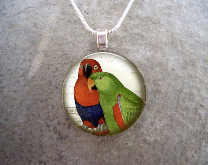 Eclectus Parrot Jewelry - Glass Pendant Necklace - Victorian Bird 20