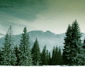 Mountain Photography, Nature Art, Winter Print, Evergreen Pine Trees, Folk Art, Folklore, Forest Photography - Sleeping Knight