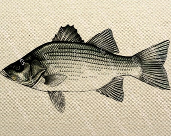 Bass Instant Download Digital Transfer Image for Iron On / 25