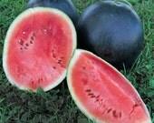 Watermelon Blacktail Mountain Heirloom Seeds  Non GMO