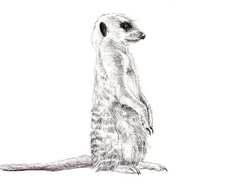 "Meerkat art print of an original drawing available 5x7"" or 8x10"""