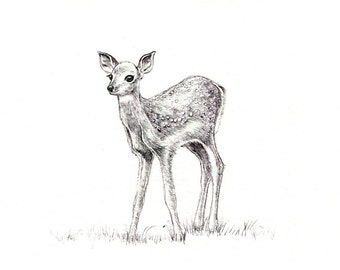 fawn print digital print of an original drawing available 5x7 or