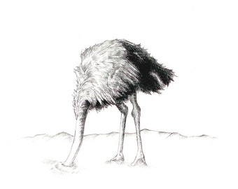 "Ostrich Head in Sand Print: digital print of an original drawing available 5x7"" or 8x10"""