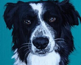 6x6 acrylic pet portraits