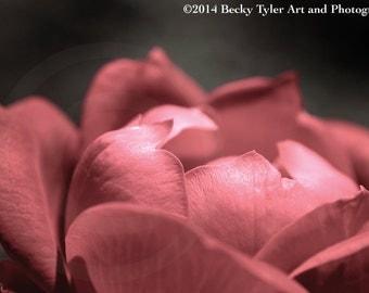 Red Rose Fine Art  Photo Print