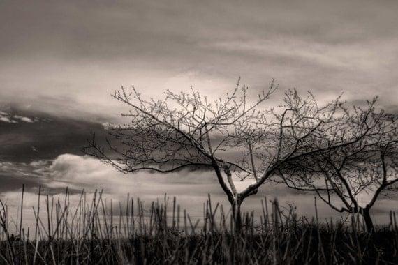Cherry Farm Photography, Leelanau, Michigan, Traverse City Photo, Tree Art Photograph