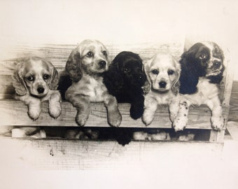 Doggone Cute... Vintage 1945 Photograph - Puppies in Crate, 8 x 10, Original Photo