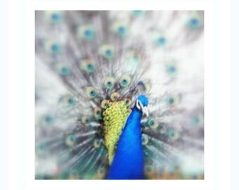 peacock photography- bird nature picture- blue feathered bird- woodland bird- animal wall decor - animal photography-wall decor - blue green