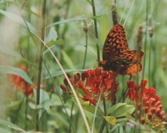 Orange on Orange, Wildflower Series, Art Photography