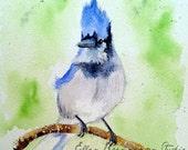 Bluejay Limited Edition watercolor print by Ellen Brenneman