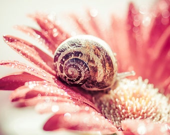 The snail Photograph