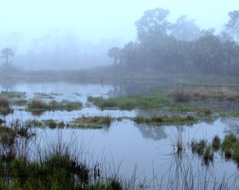 Florida's Swamplands on a Foggy Morning - Fine Art Landscape Photography - 8x10 or 11x14 Prints