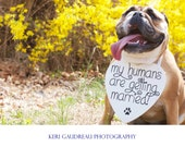 Wood My Humans are getting Married Save the Date Sign Heart Signs Photography Props Enagement Pictures Wedding Dog Kentucky Wildcat Blue UK