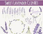 Lavender Sprigs Clip Art // Photoshop Brushes // Hand Drawn Elements // Herbal Foliage Leaves Twigs Branches // Vector // Commercial Use