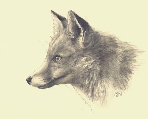 aj how to draw realistic fox