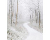Minimalistic White Winter Woods Winter Wonderland, Wiltshire UK, Large Wall Art Decor Fine Art Photo Print Marlborough - renphotographycouk