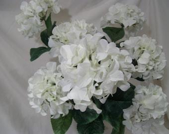 3 White Hydrangea Bushes