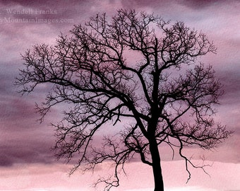Bare Tree Silhouette With Pink and Blue Watercolor Background  E87
