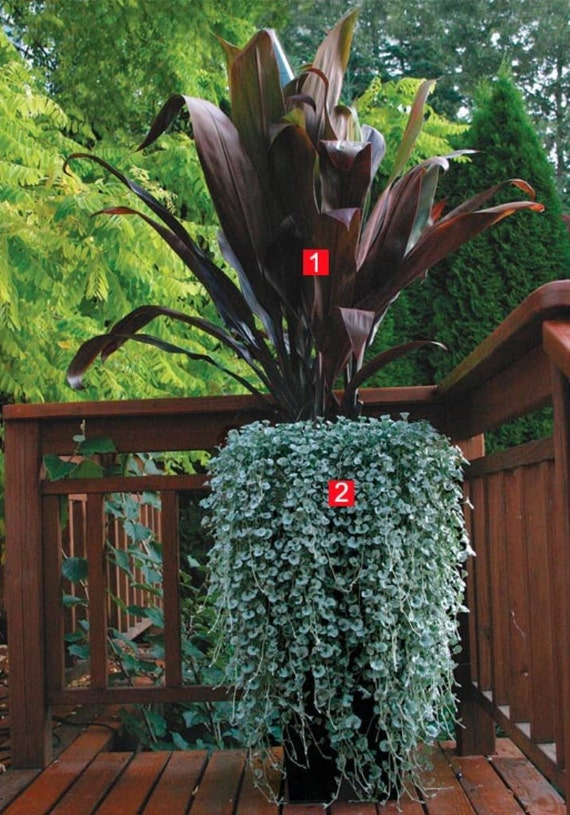 Front Porch Landscaping Ideas Shrubs