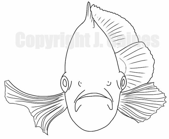 Go Back u0026gt; Gallery For u0026gt; Oscar Fish Coloring Pages