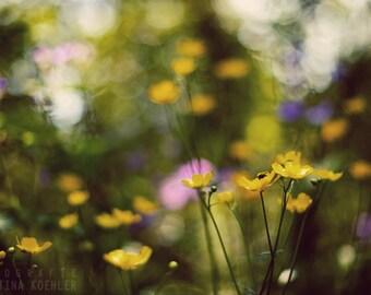 WILDFLOWERS photography print, mountain flower print, 8x12