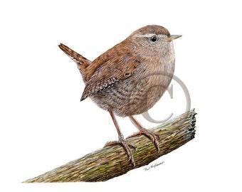 Winter wren painting, WREN Print, birdie, Bird Watercolor painting, gift for bird watcher