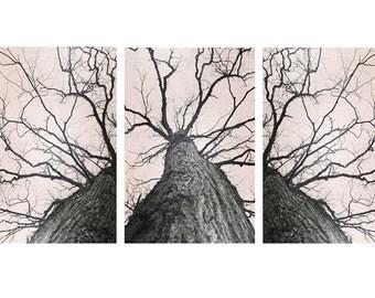 Tree Art Set, Tree Triptych, Forest Photography, Nature Art Set, Large Wall Art, Set Of 3 Prints, Wall Art Set, Wall Decor, Neutral Art