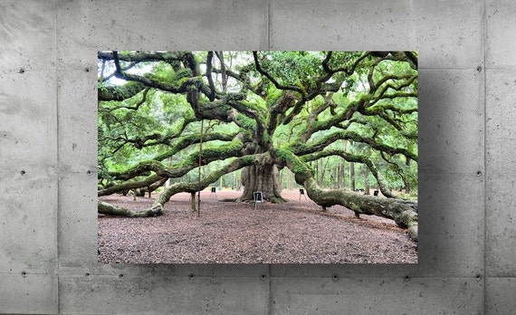 Nature Photography Angel Oak Charleston SC Ancient Tree Wall Art Photo Photograph Picture