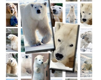 Polar Bear Arctic Wild Zoo Animal White Digital Images Collage Sheet 1x2 inch Rectangles Domino Commercial INSTANT Download RD48