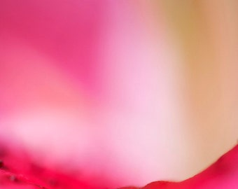 Lily flower, abstract fine art photographic print, modern, macro photography, nature, pink.