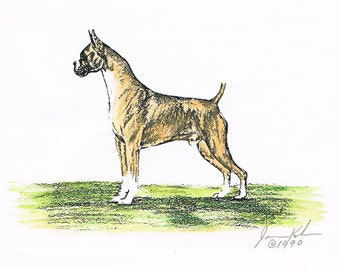 Tawny Boxer-Handcolored & Signed Dog Boxed Blank Notecards w/Envelopes Set of 5 by J.Kohr(Renner)-Free US Shipping