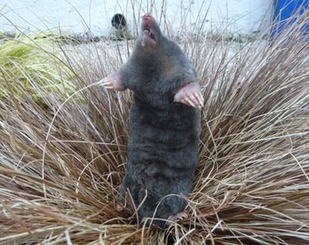 A soft taxidermy mole.