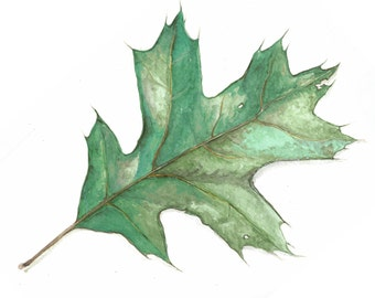 Leaves Variety Watercolor Greeting Card Set