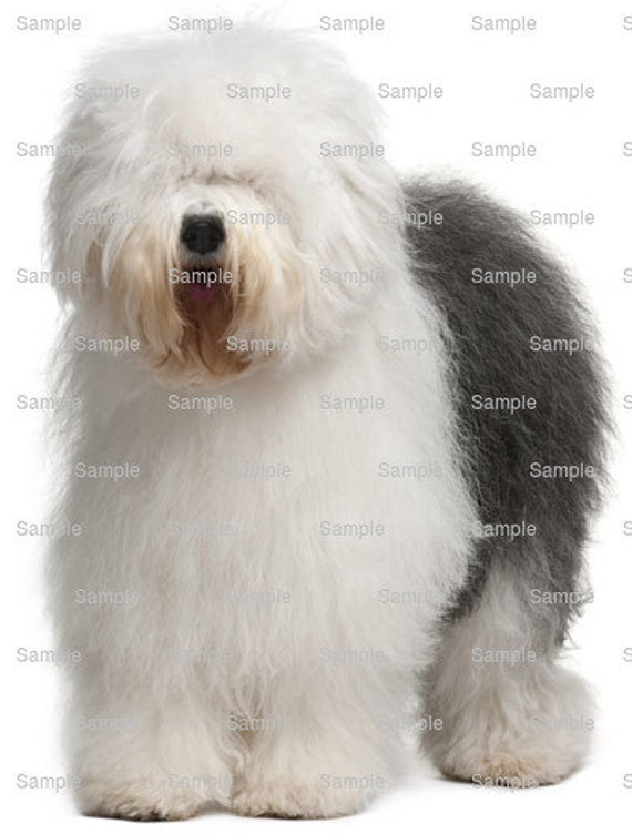 Old English Sheepdog Dog Birthday - Edible Cake and Cupcake Topper For Birthday's and Parties! - D6717
