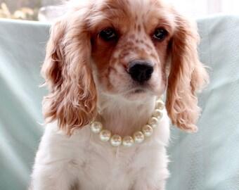 Crème perle collier de chien. Grande taille les bijoux de perle mariage pour animaux de compagnie pour les chiens. Grand collier de perle chien Ivoire. Accessoires pour animaux de compagnie pour Mans meilleur ami.