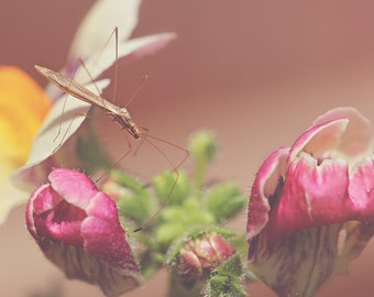 Long Legs Color Photo Print { yellow, fuchsia, pink, insect, flower, green, brown, six, wall art, macro, nature & fine art photography }
