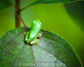 Tiny Frog Lost Lake Trail, Ledges State Park, Fine Art, Matted 8x10 photo