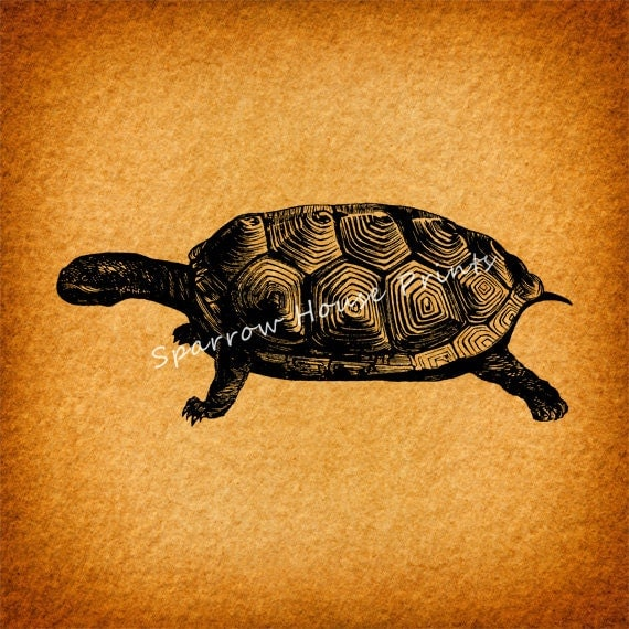 Vintage Art Tortoise Print Turtle Home Decor Antique