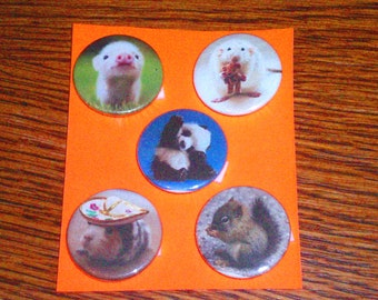 Baby Animals Badge Set