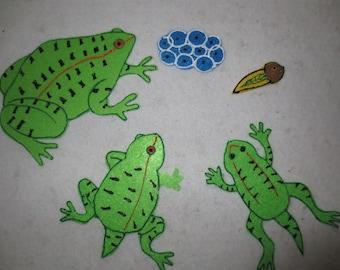 Frog Life Cycle - felt set