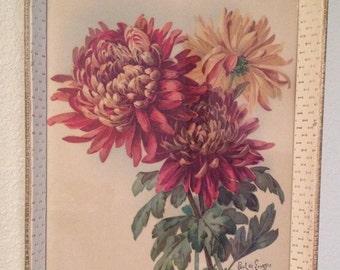 Vintage Paul De Longpre Original Print Chrysanthemum Signed Not A Reproduction A great collection piece