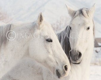 Horse Play Fine Art Photography Instant Download